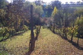 Les vignes de Monfort (1)