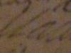 4536-margurite-signature2